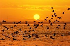 Uccelli e sole Immagine Stock