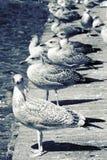 Uccelli ed acqua Immagini Stock