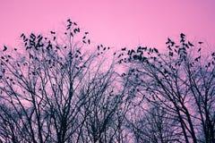 Uccelli ed alberi Fotografie Stock Libere da Diritti