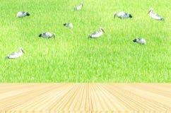 Uccelli ed ambiti di provenienza dell'azienda agricola del riso Fotografia Stock
