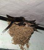 Uccelli ed animali in fauna selvatica Il sorso alimenta gli uccelli di bambino immagine stock