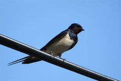 Uccelli ed animali in fauna selvatica Il sorso alimenta gli uccelli di bambino immagini stock