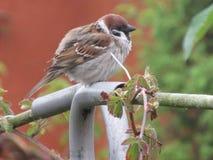 Uccelli ed il loro ambiente fotografia stock