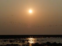 Uccelli ed il tramonto Immagini Stock Libere da Diritti