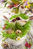 Uccelli ed uova sul crescione Fotografia Stock