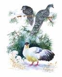 Uccelli esotici selvaggi dell'acquerello sui fiori Immagini Stock Libere da Diritti