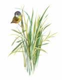 Uccelli esotici selvaggi dell'acquerello sui fiori Immagini Stock