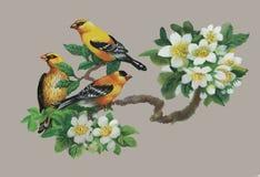Uccelli esotici selvaggi dell'acquerello sui fiori Immagine Stock