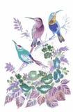 Uccelli esotici selvaggi dell'acquerello sui fiori Fotografie Stock