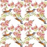Uccelli esotici selvaggi dell'acquerello sul modello senza cuciture dei fiori su fondo bianco Fotografie Stock