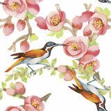 Uccelli esotici selvaggi dell'acquerello sul modello senza cuciture dei fiori su fondo bianco Immagine Stock