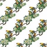 Uccelli esotici selvaggi dell'acquerello sul modello senza cuciture dei fiori su fondo bianco Immagini Stock