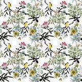 Uccelli esotici selvaggi dell'acquerello sul modello senza cuciture dei fiori su fondo bianco Fotografia Stock