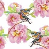 Uccelli esotici selvaggi dell'acquerello sul modello senza cuciture dei fiori su fondo bianco Immagine Stock Libera da Diritti