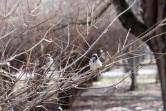 Uccelli in fauna selvatica Punto di vista di bello uccello che si siede su un ramo nell'ambito del paesaggio di luce solare Immagini Stock