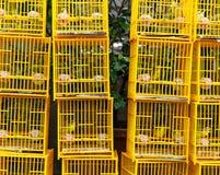 Uccelli in gabbia al mercato degli uccelli Fotografia Stock