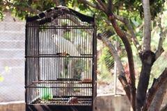 Uccelli in gabbie Fotografie Stock Libere da Diritti