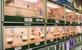 Uccelli in gabbie Immagine Stock