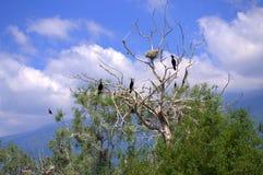 Uccelli idilliaci sulla visualizzazione ad albero Immagini Stock