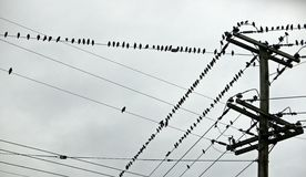 Uccelli inzuppati Fotografia Stock