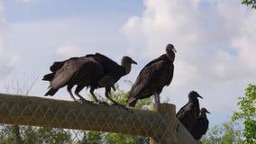 Uccelli 4k Florida S.U.A. dell'azienda agricola dell'alligatore di giorno di estate stock footage