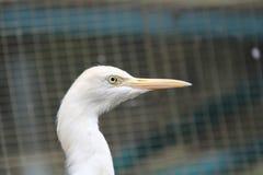 Uccelli a Kuala Lumpur Bird Park immagini stock
