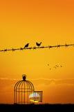 Uccelli liberi su cavo Fotografia Stock Libera da Diritti