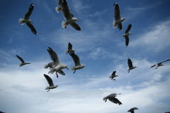 Uccelli librantesi immagine stock libera da diritti
