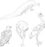 Uccelli lineari del disegno royalty illustrazione gratis