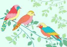 Uccelli luminosi che si siedono su un ramo Fotografie Stock Libere da Diritti