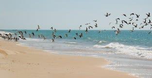 Uccelli marini Immagine Stock Libera da Diritti