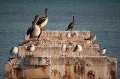 Uccelli marini ed oceano Immagini Stock