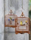 Uccelli messi in gabbia di canzone Fotografia Stock Libera da Diritti