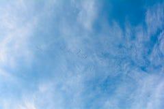 Uccelli migratori Immagini Stock Libere da Diritti