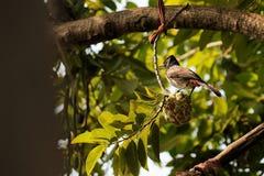 Uccelli in Nature' s dal Nature' mondo di s che mangia alimento fotografia stock libera da diritti