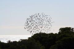 Uccelli nel cerchio Immagini Stock