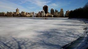 Uccelli nel cielo di Manhattan fotografia stock libera da diritti