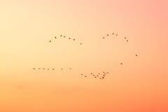 Uccelli nel cielo sul tramonto. Fotografie Stock