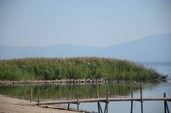 Uccelli nel lago Immagine Stock Libera da Diritti