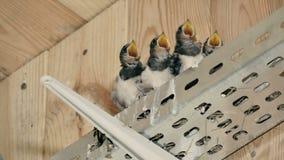 Uccelli nel nido archivi video