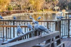 Uccelli nel parco di Ueno, Giappone fotografie stock