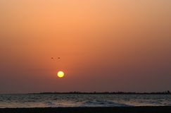 Uccelli nel tramonto Fotografie Stock