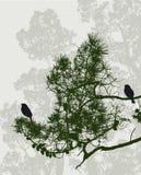 Uccelli nell'abetaia Fotografie Stock Libere da Diritti