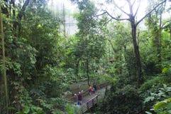 Uccelli nell'uccelliera del parco dell'uccello di Jurong Immagini Stock