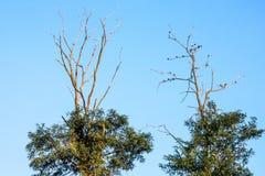 Uccelli nella cima dell'albero Fotografia Stock Libera da Diritti