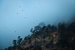 Uccelli nella foschia, Kasol immagini stock