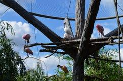 Uccelli nella gabbia Immagini Stock Libere da Diritti