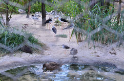 Uccelli nella gabbia Immagine Stock Libera da Diritti