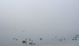 Uccelli nella nebbia Fotografia Stock Libera da Diritti