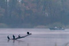 Uccelli nella nebbia e nella pesca immagini stock